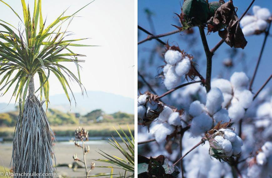 Halbleinen - besteht aus Leinen und Baumwolle